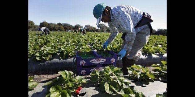 Migrant Farm Worker Program Rife With Gender Discrimination, UFCW