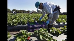 Canadian Migrant Worker Program Rife With Sexism, Union