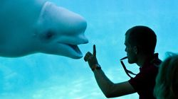 Whales, Dolphins Can Stay At Vancouver Aquarium,