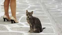 Woman Attacked After Stopping To Help Kittens Cross The