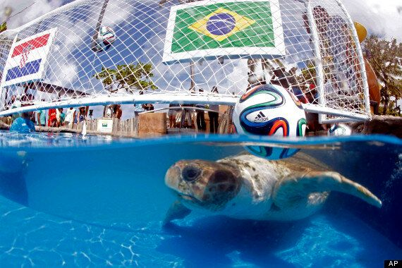 World Cup Animals Tapped To Predict Game Outcomes (PHOTOS,