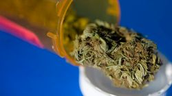 Medical Pot A Gamble, Says Licensed B.C.