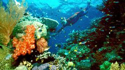 Large Part Of Great Barrier Reef Left Colourless After