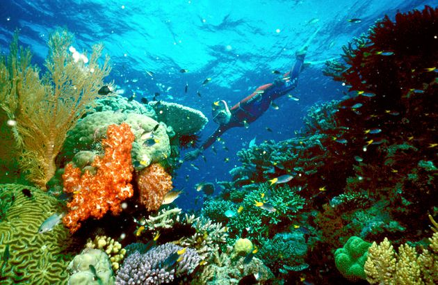 Great Barrier Reef Severely Damaged By