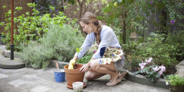 woman potting small fig tree