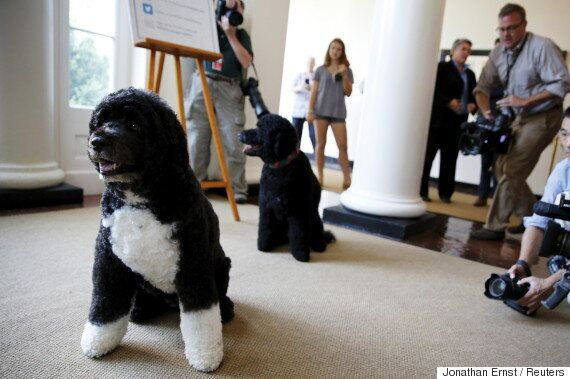 Justin Trudeau Dog: The Prime Minister's Family Got Even