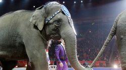 End Of An Era: Ringling Bros. Circus Halts Elephant
