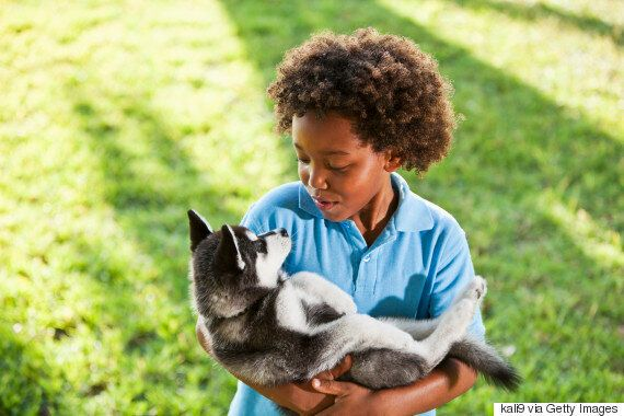 Exposing Children To Pets Can Help Reduce Allergies Over