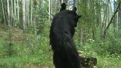 Bear-Chicka-BOW-WOW!