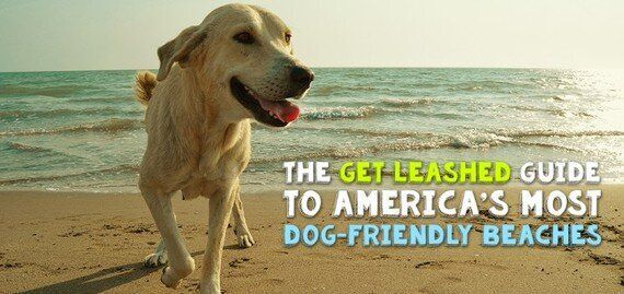 The Get Leashed Guide To America's Most Dog-Friendly
