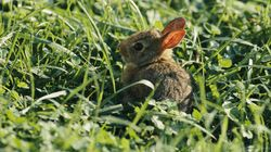 Supreme Court Won't Stop Bunny Slaughter In Tourist