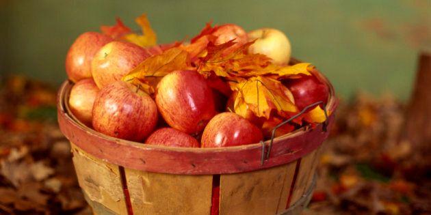 Basket of