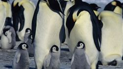 WATCH: 10 Animal Dads That Deserve 'Father Of The Year'