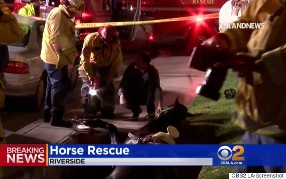 Horse Falls Into Utility Vault In California After Leaving Taco
