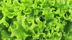 Ontario Police Ask Public To 'Romaine Calm' After $45K Lettuce
