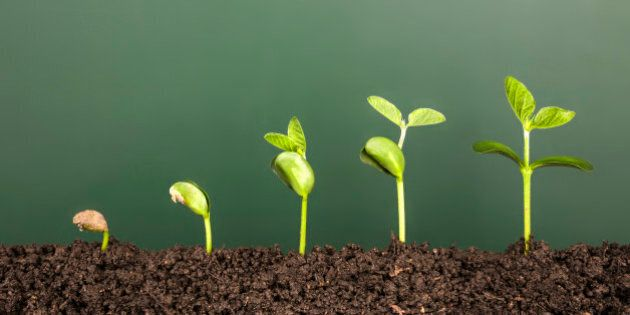 bussiness growth:new life growing before