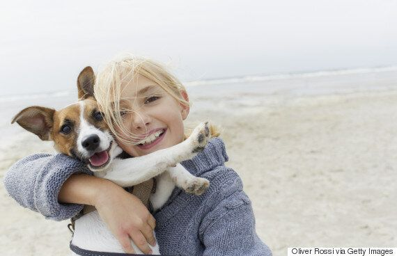 Hugging Your Dog Is Making It Stressed Out, Study