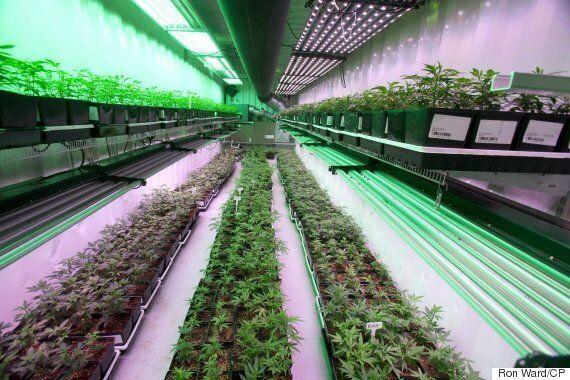 New Brunswick Hopes Marijuana Will Boost Flailing