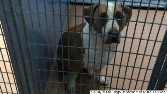 Dog Mauls 3-Day-Old Boy To Death In San