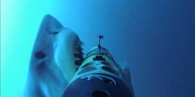 Great White Shark Attacks Robot, Robot Never Stood A Chance