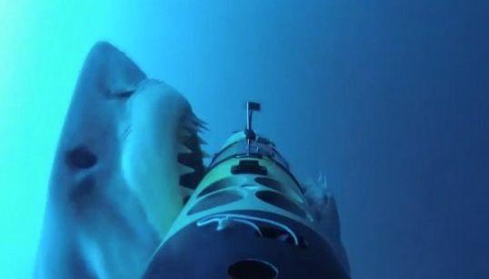 WATCH: Frightening Shark Attack Caught On