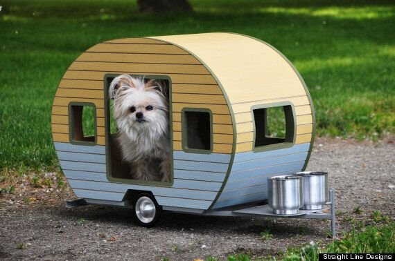 You Can Buy Your Dog A Customized Trailer For $800