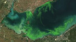 Toxic Algae Blooms Could Soon Threaten