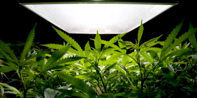 Medical Marijuana 'Investor Warning' Issued By Canadian Securities
