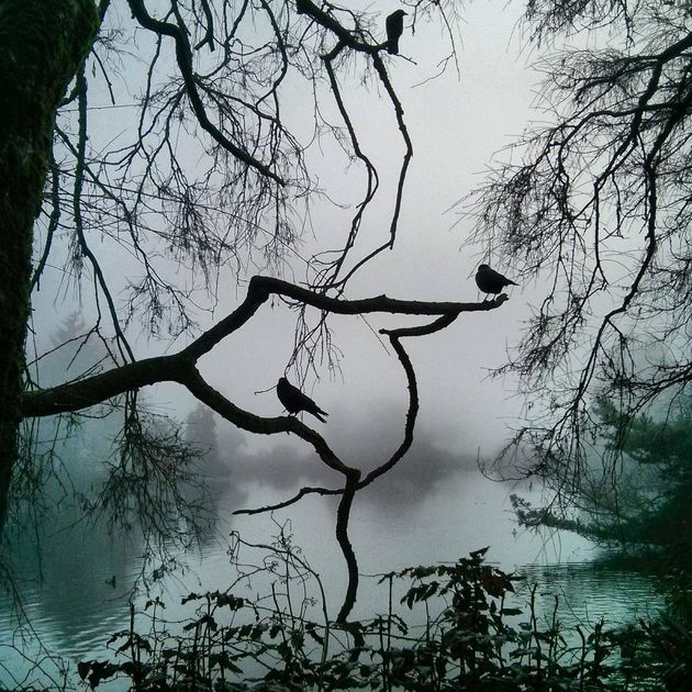 Haunting Vancouver Fog Photo Is Edgar Allan Poe Come To