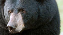 Bear Kills Oilsands Worker In Northern