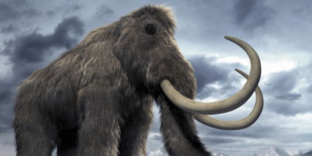 Woolly Mammoth Clone Is Now Possible, Say