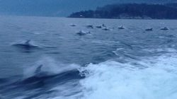 WATCH: Hundreds Of Dolphins Surprise Rescue