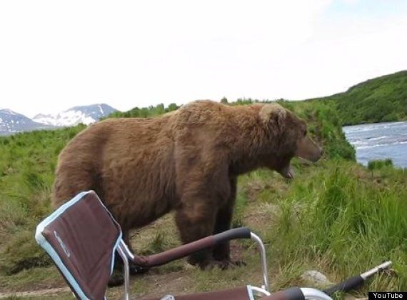 Incredible Close Encounter With Brown Bear Captured On