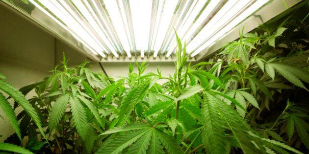 Medical Marijuana Company To Seek TSX