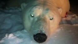 LOOK: Environment Minister Posts Photo Of Dead Polar