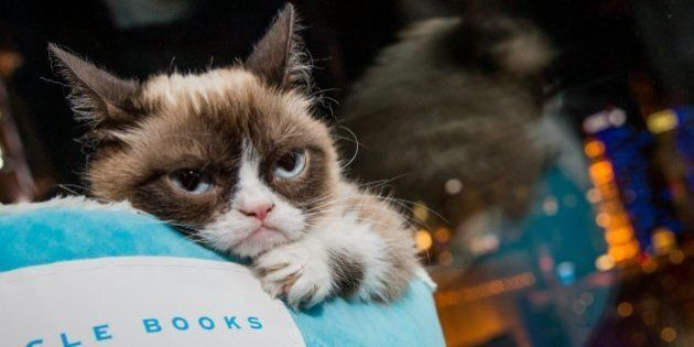 Grumpy Cat Visits Toronto Eaton Centre To Promote New Book (TWEETS,