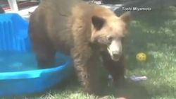 ►Cute Bear Does Exactly What We All Want To Do On A Hot
