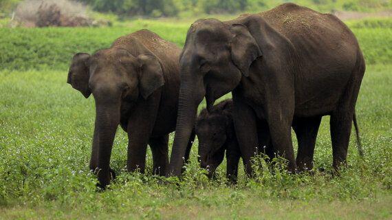 Examining Core Values on World Elephant