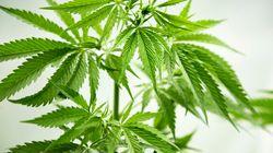 Marijuana Prescribing Doctors Shouldn't Be