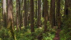 B.C. Endangered Species Have Little Protection, Confirms Court