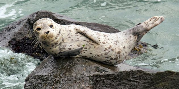 Canadian Seal Meat Pilot Project Gets $292,000 Boost From