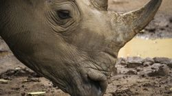Calgary Zoo Welcomes A Bunch Of New