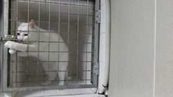 WATCH: Clever Cat Frees Himself From