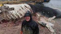 Royal Ontario Museum: We Can Handle 1 Dead Whale, 2 Might Be Too