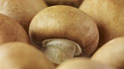 Such Fun Guys -- Why Mushrooms Are The Freaking