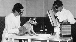 Our Policy On Animal Testing is Distinctly