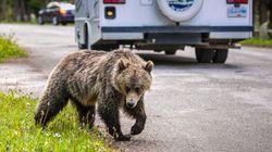 Banff Seeing 'Unprecedented' Wildlife