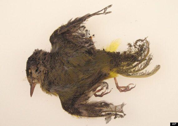 A Solar Plant Is Setting Birds On Fire In Mid-Flight