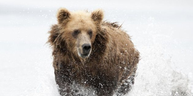 Vermillion Lakes Near Banff Closed Due To Bear