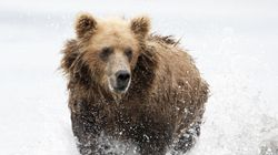 Aggressive Grizzlies Force Lakes